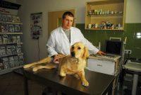 PROVET cześć zabiegowo diagnostyczna, badanie USG